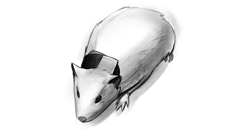 concussion_collar_development_mouse_770x433